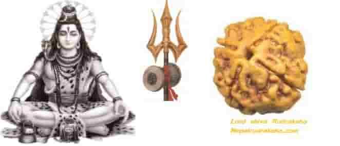 What is Rudraksh - रुद्राक्ष क्या है