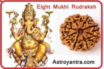 Eight Mukhi Rudraksha | अष्ट मुखी रुद्राक्ष - Astroyantra
