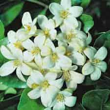 जानिए शिवजी पर कौन सा फूल चढाने से क्या फल मिलेगा