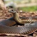 Snake in Dream | स्वप्न में सर्प देखने का शुभ अशुभ विचार